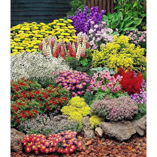 Garten-Welt Großer Staudengarten 14 Pflanzen mehrfarbig