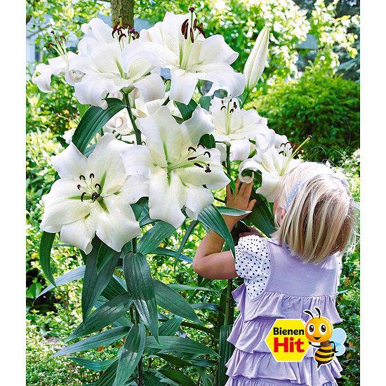 "Garten-Welt Tree-Lily® ""Pretty Woman"" , 3 Stück weiß"