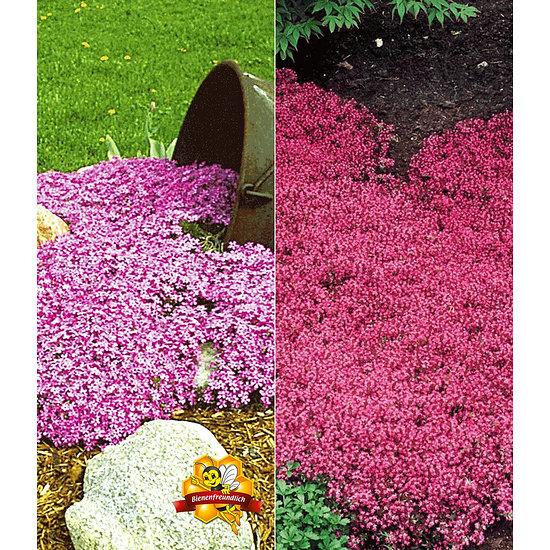 Garten-Welt Bodendecker-Kollektion pink und blau, 6 Pflanzen mehrfarbig