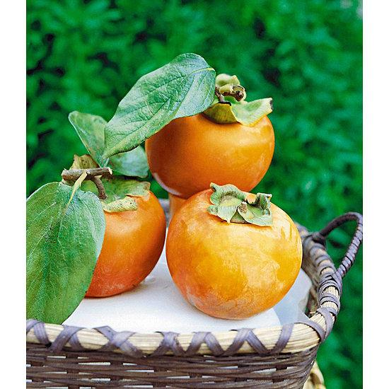 Garten-Welt Winterharte Kaki 1 Pflanze orange