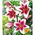 "Garten-Welt Tree-Lily® ""Altari®"" , 3 Zwiebeln mehrfarbig (1)"